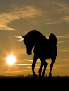 Arabian in the sunset pic