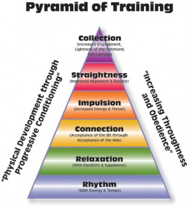 dressage-training-pyramid